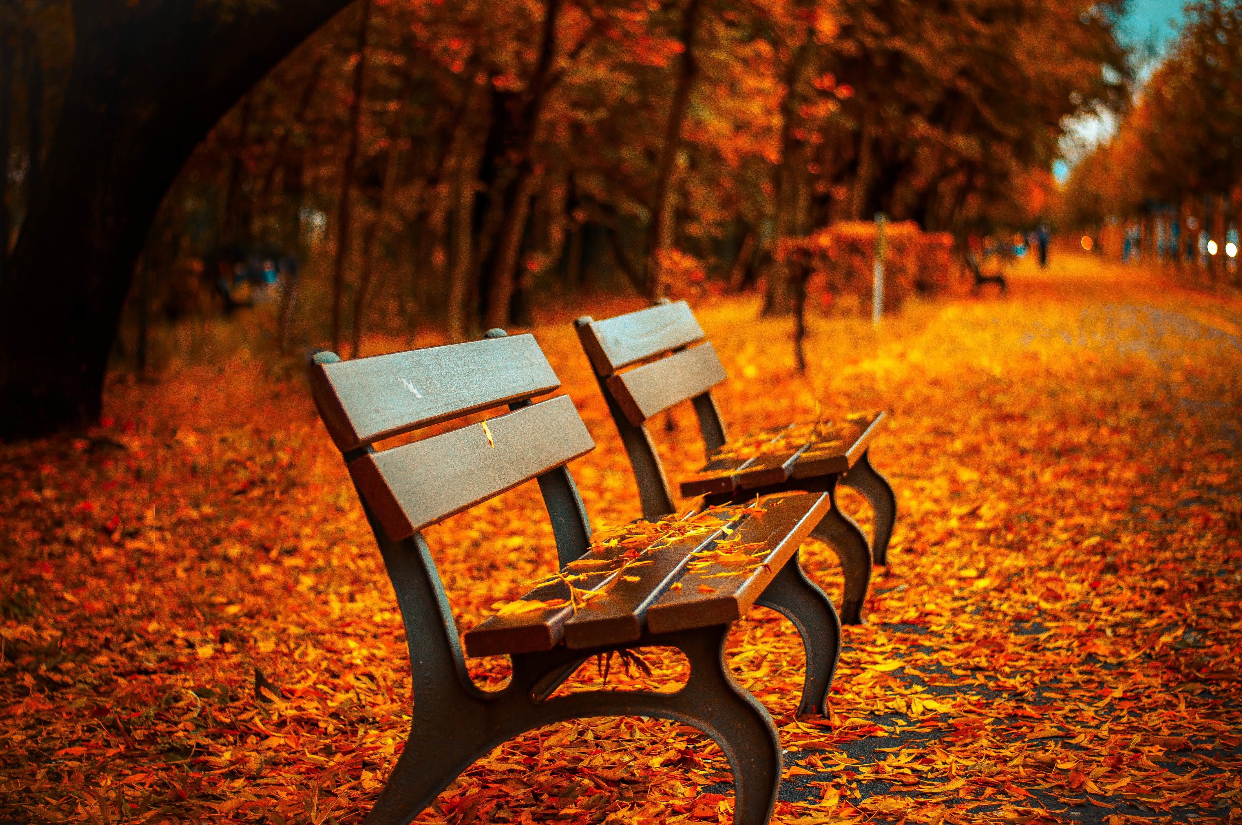 Alles neu macht der Herbst