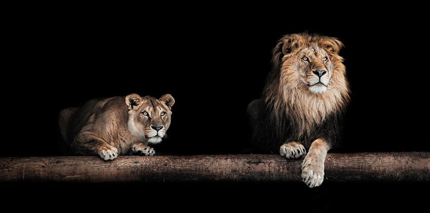 Wie du Respekt vom Chef bekommst und Konflikten vorbeugst