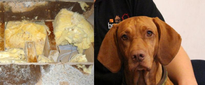 Versteckten Schimmel mit dem Spürhund finden - Kosten, Ergebnis, Vorteile