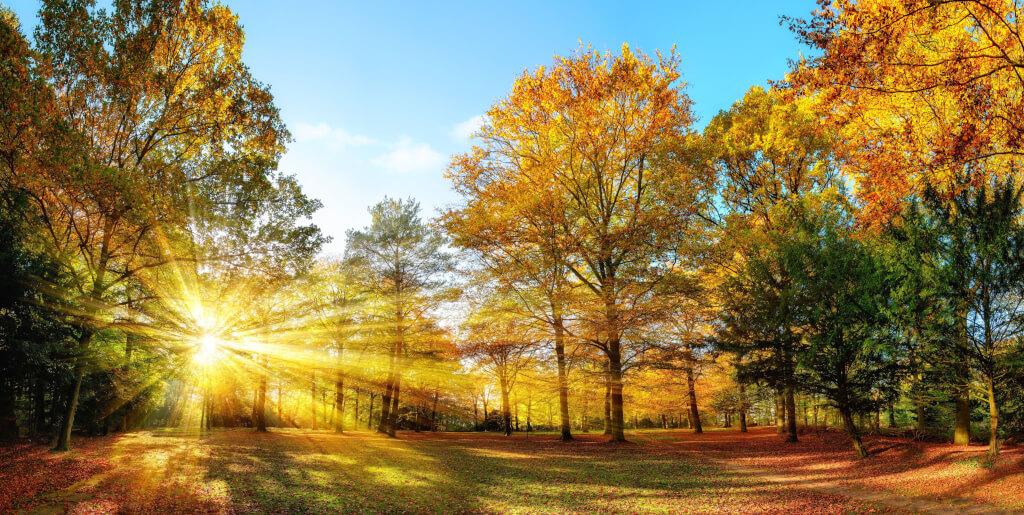 Saisonalitäten: Alles was sie über die Seasonal-Analyse wissen müssen