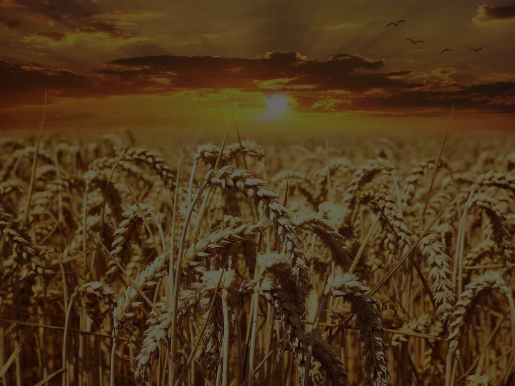 Analyse: Lohnt sich ein Investment in Rohstoffe?