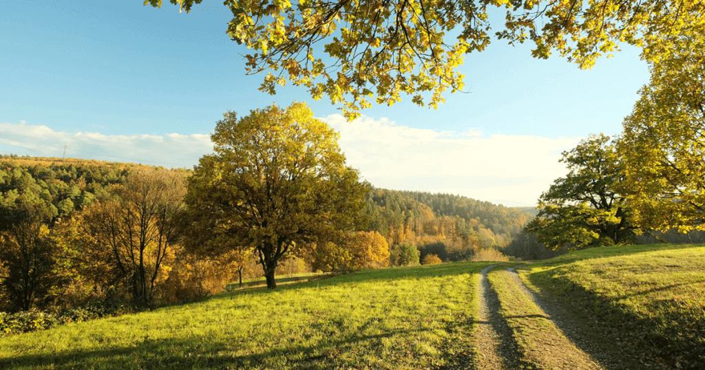 Stadtbezirk Botnang - von Wäldern umgeben