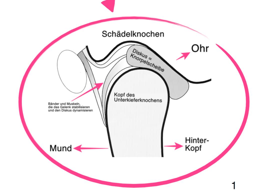 Die Anatomie des Kiefergelenks