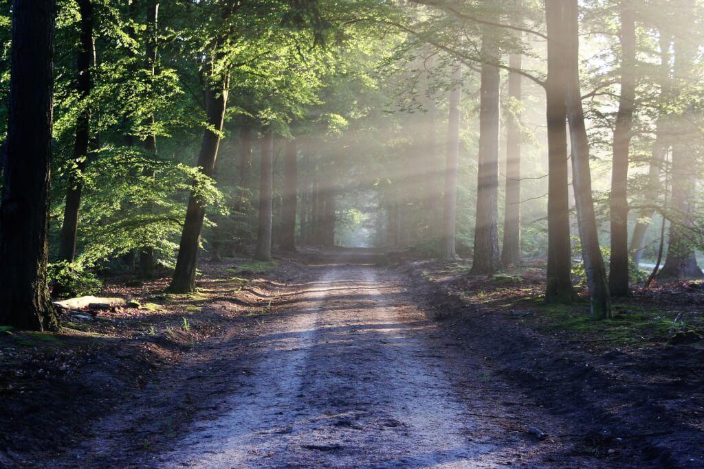 Wie du deine Glaubenssätze verändern kannst um Selbstbestimmter leben zu können(Teil 3. Blogcoaching)