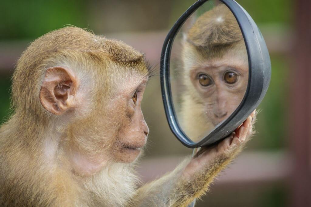 Positiv verändern monkey 3512996 1280