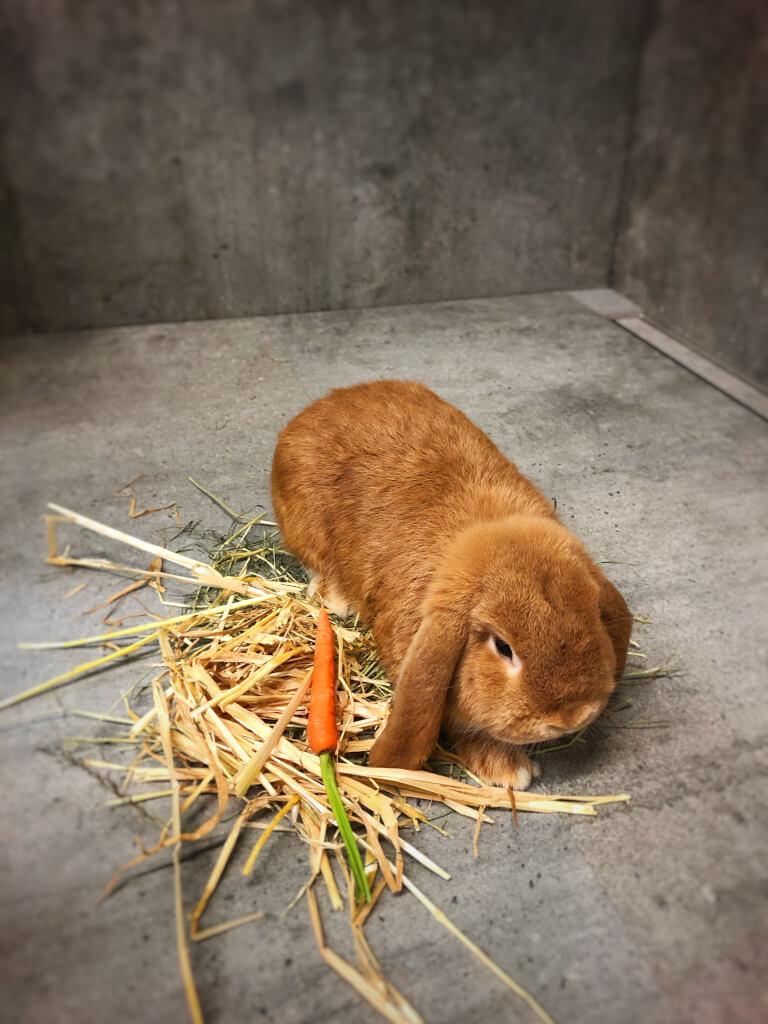 Am Wochenende sind wieder die Kaninchen zu Gast.