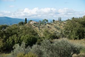 olive-tree-973058_1920