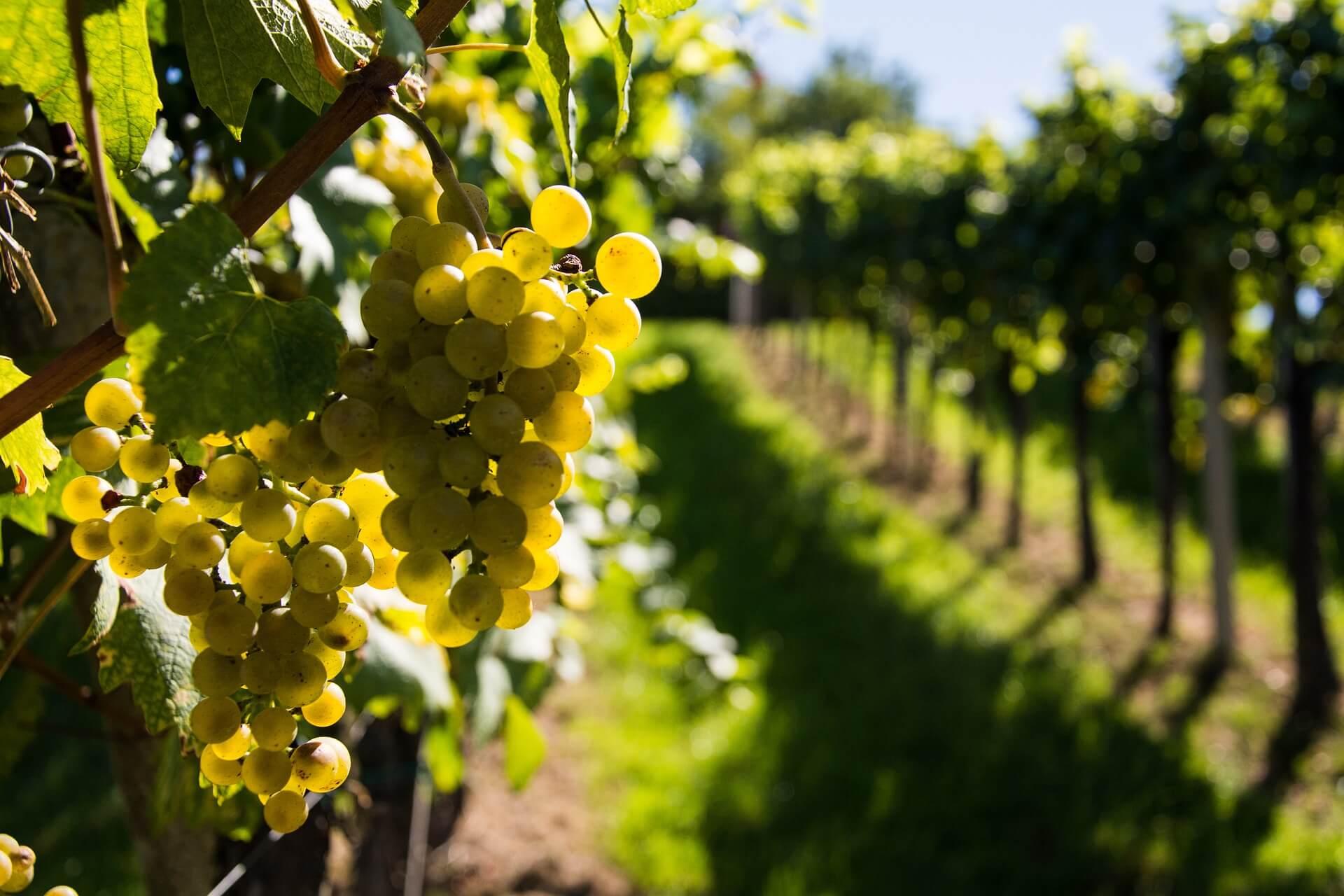 wine 933419 1920