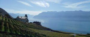 Weinberge am Genfer See
