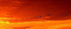 Vögel im Abendlicht mit Orange wines