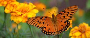 Schmetterling im Weinberg mit Orange wines