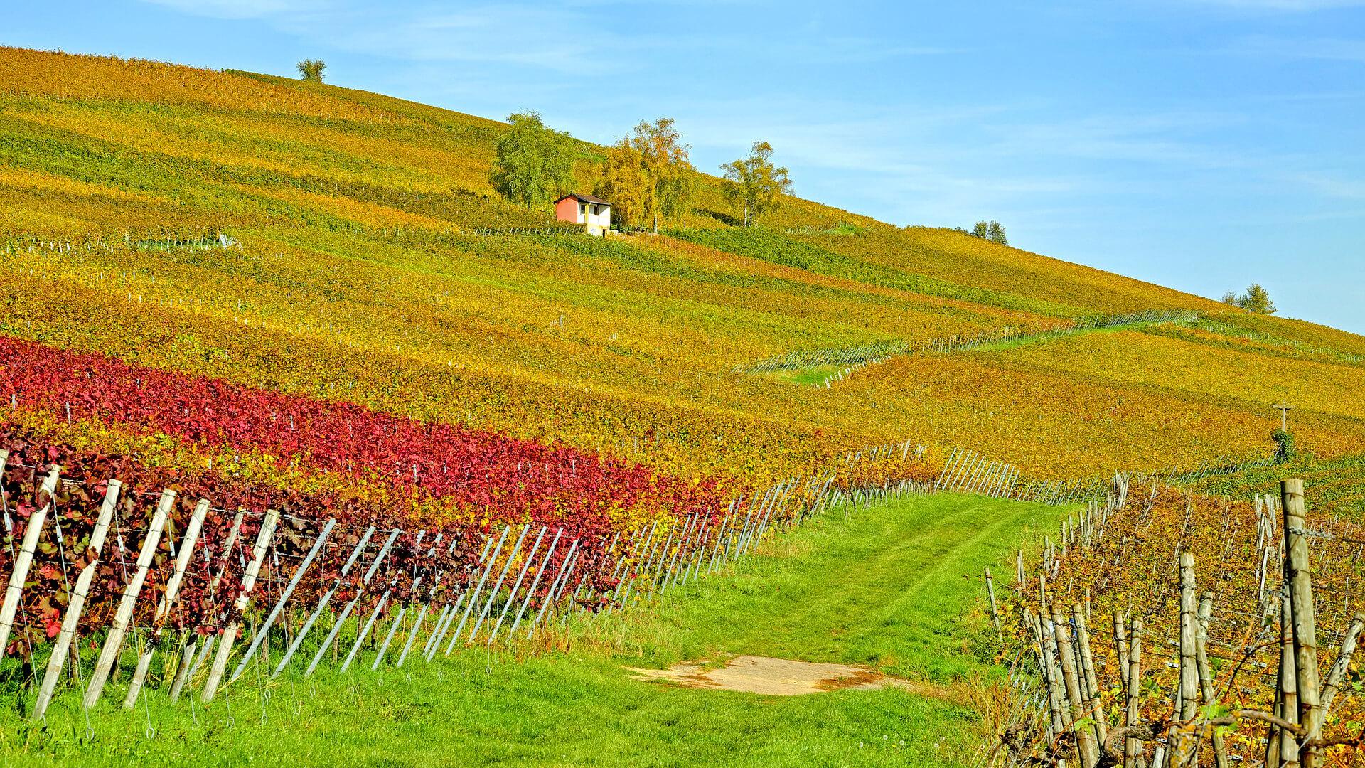 Weinprobe – die Bedeutung der Farbspiele im Weinglas