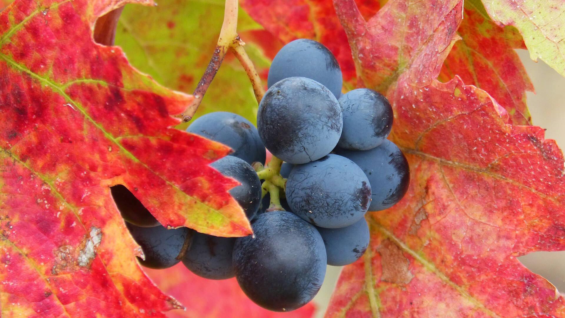 Rotwein-Entstehung - Welche Faktoren begründen die stilistische Vielfalt? (Teil 2)