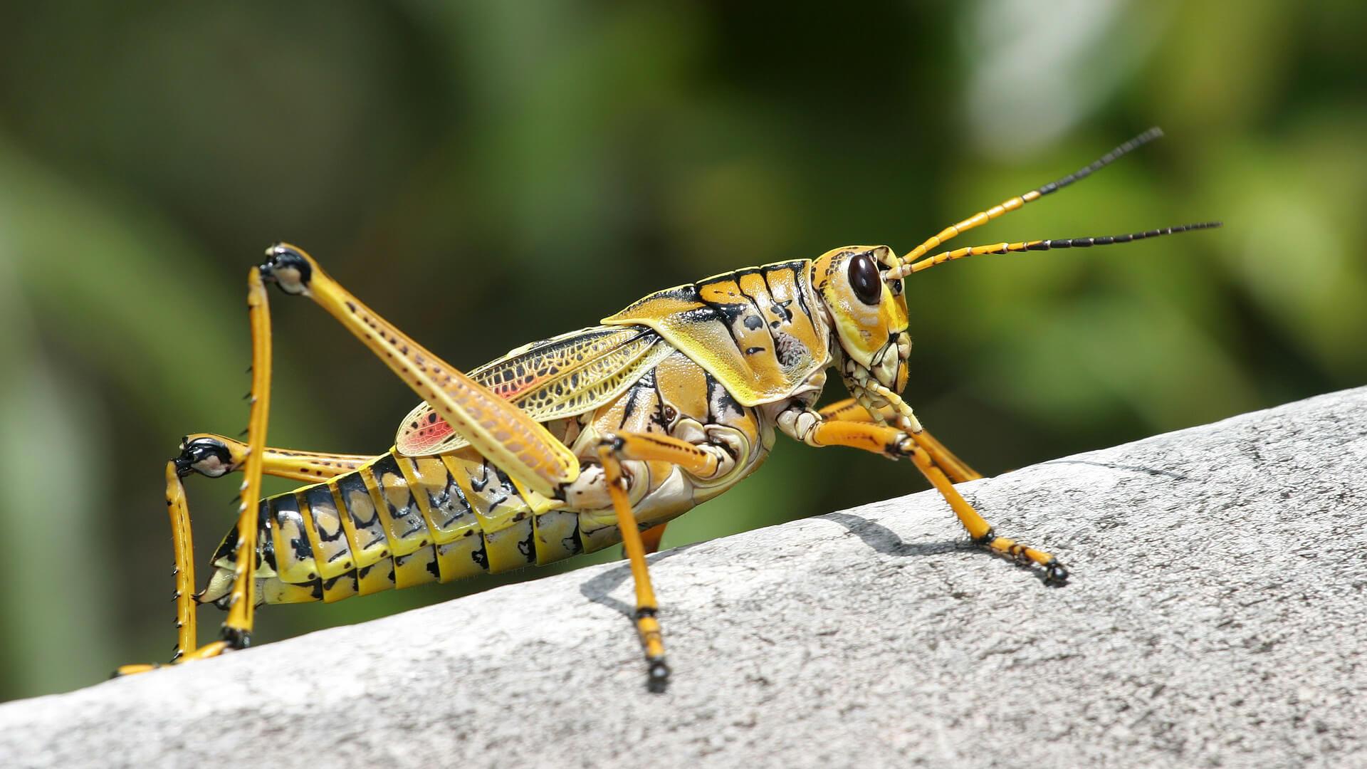 Insekten & Wein – Anregungen für spannende Paarungen
