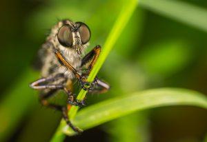 Insekten als Nahrungsquelle
