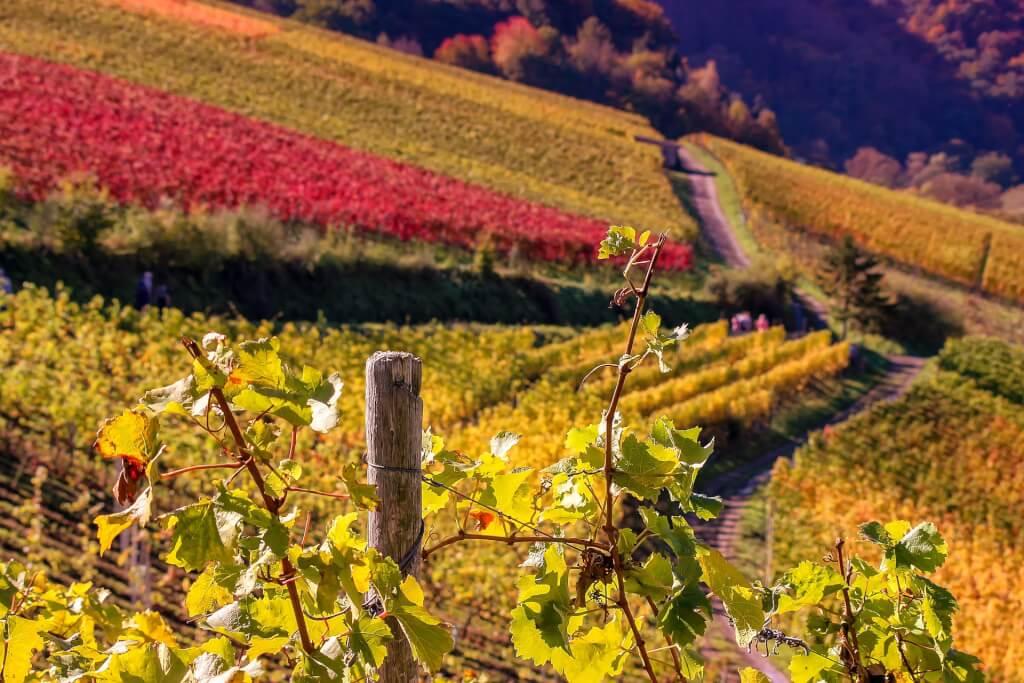 Weinempfehlungen Weinberg
