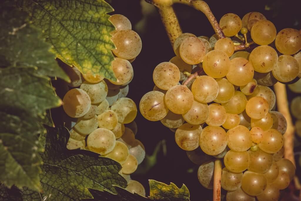 Edelsuesse Dessertweine Beeren2