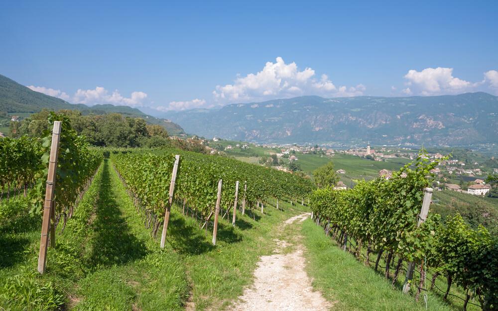 Suessweine aus Italien Trentino Weinberge
