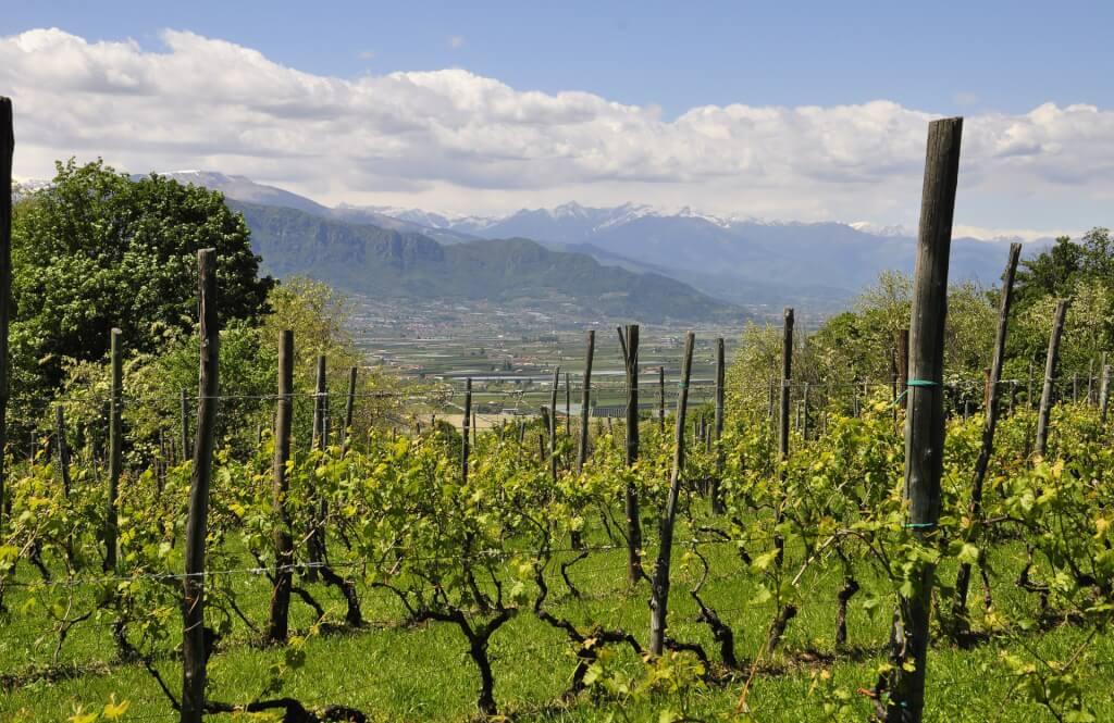 Wege zum Wein Bergblick