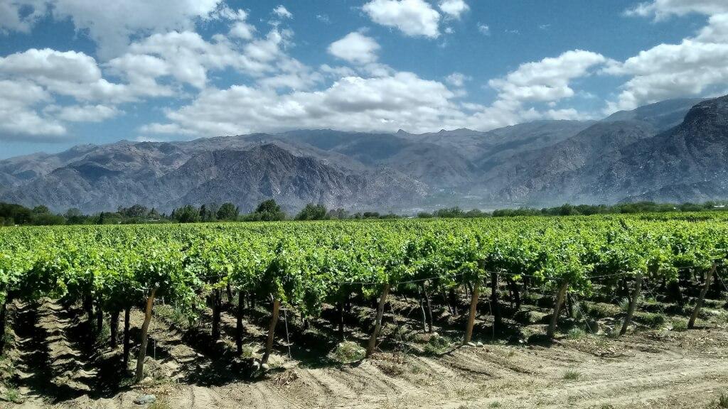 Wege zum Wein Cafayates