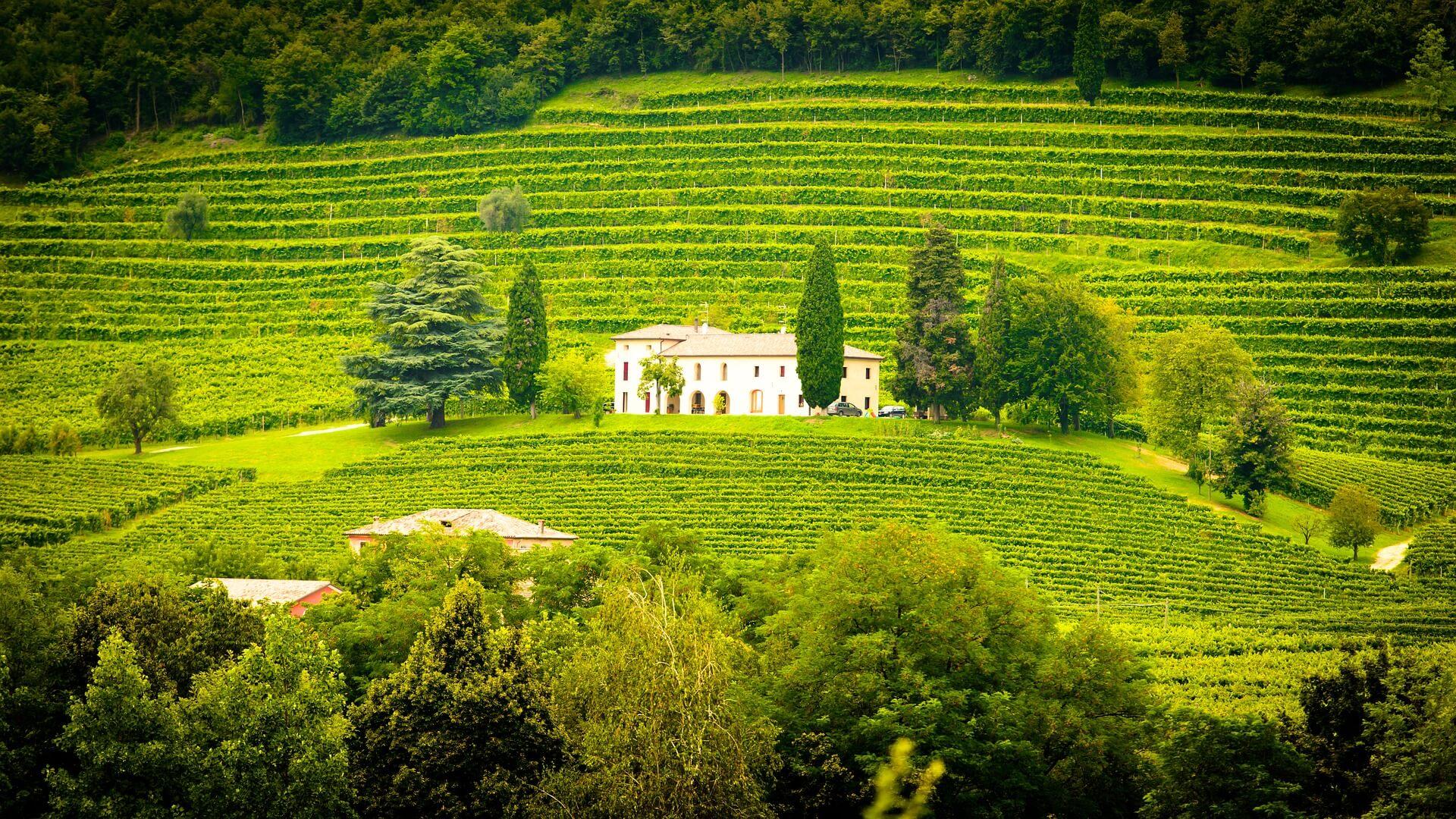 Wege zum Wein Italien
