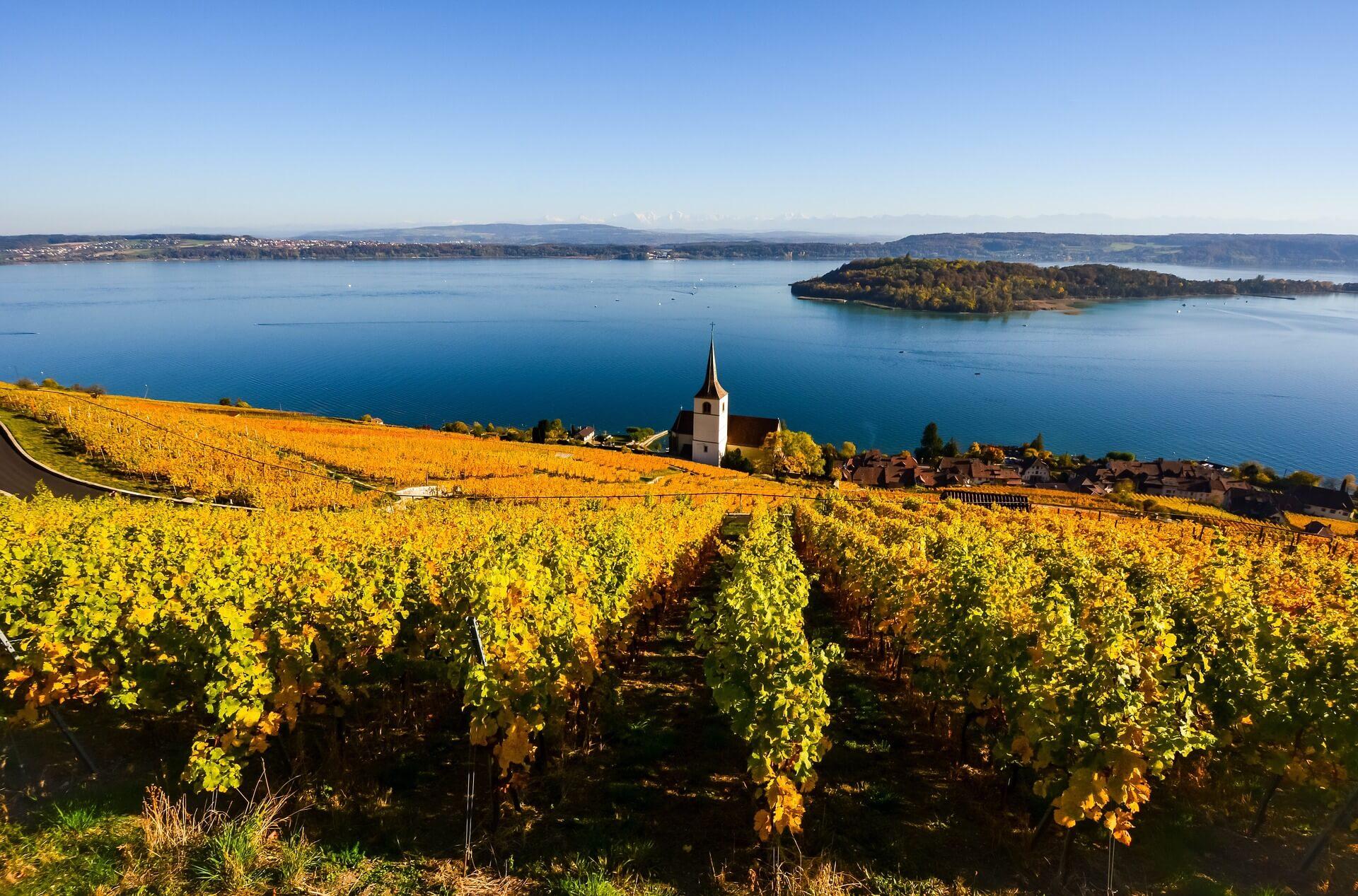 Wege zum Wein - wie du die Welt des Weines systematisch entdecken kannst