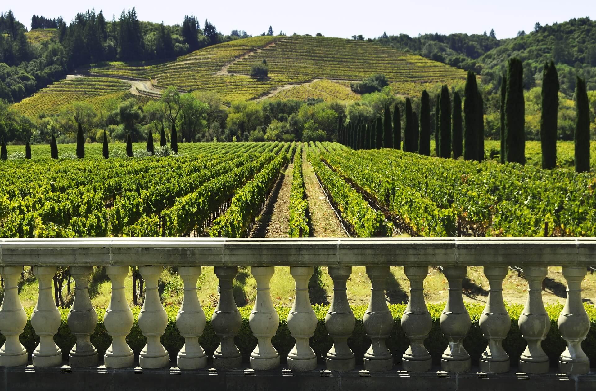 Wege zum Wein Weingartenblick