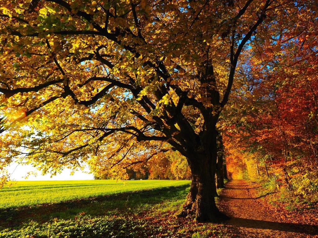 Weinprobe Herbstbaum