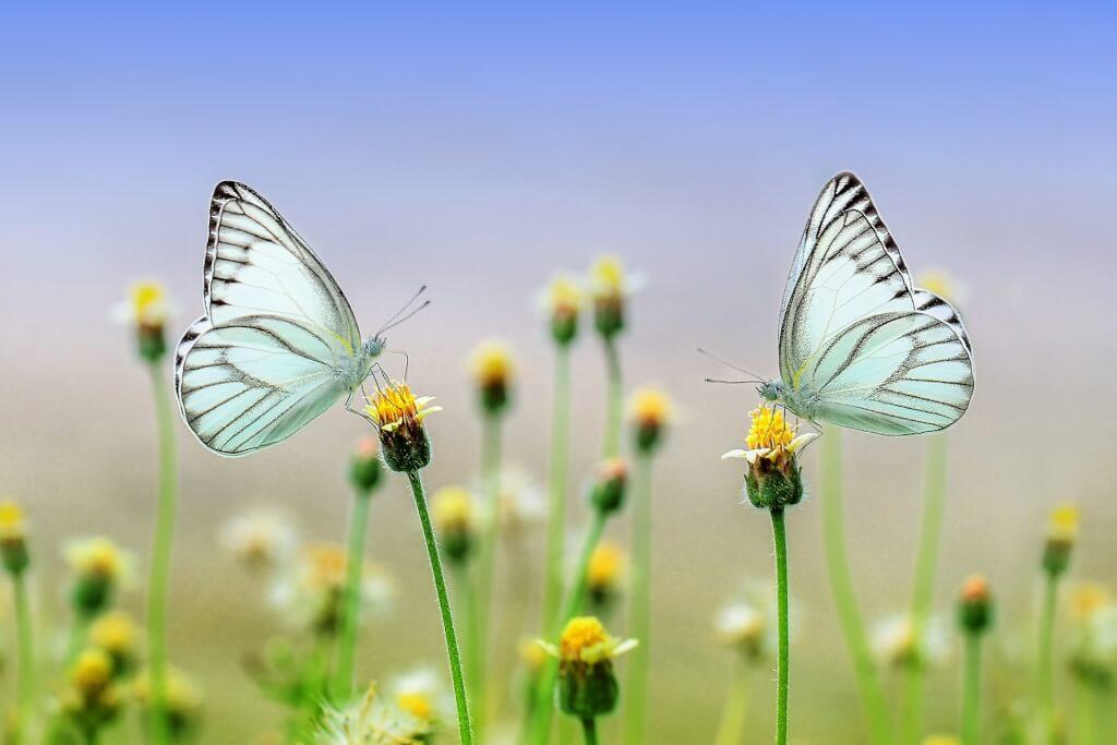 Weinprobe Schmetterlinge