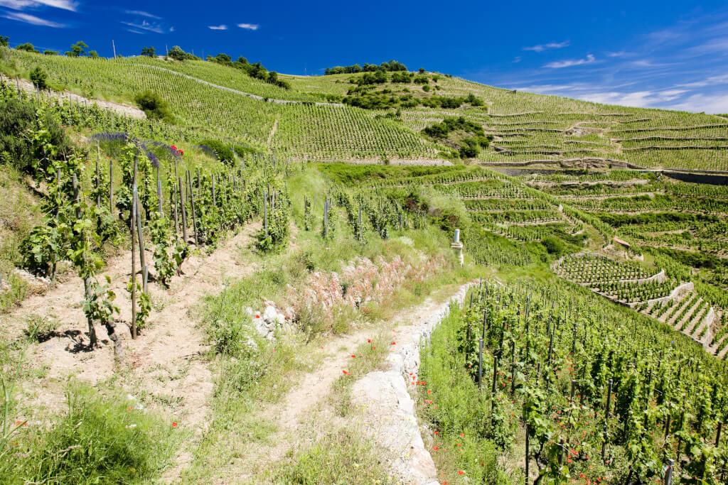 Hermitage Wein