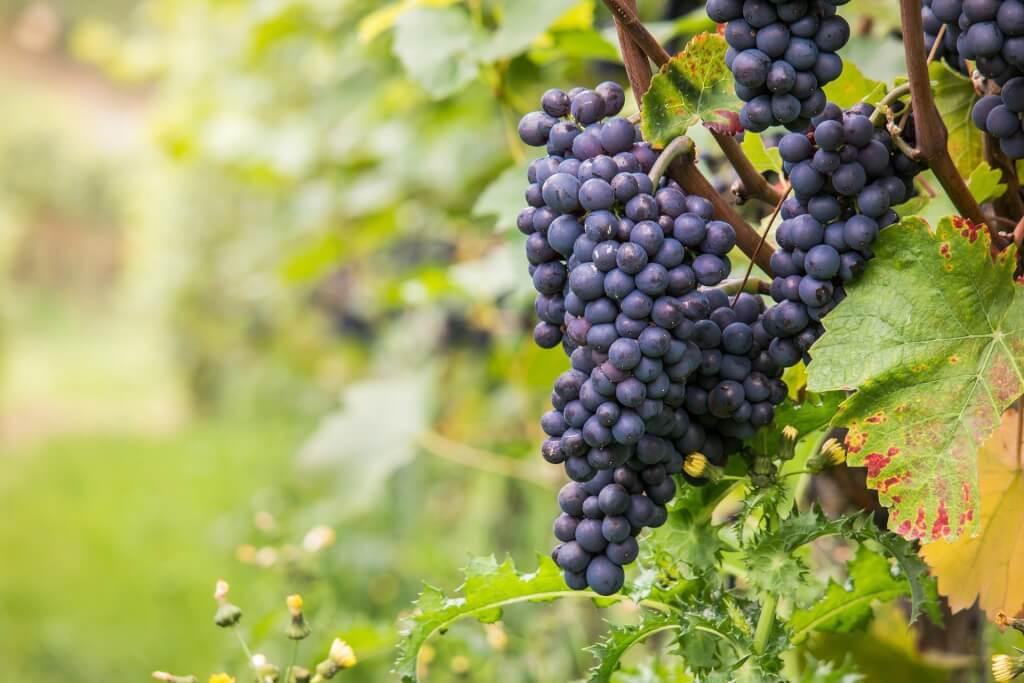wine 980218 1920