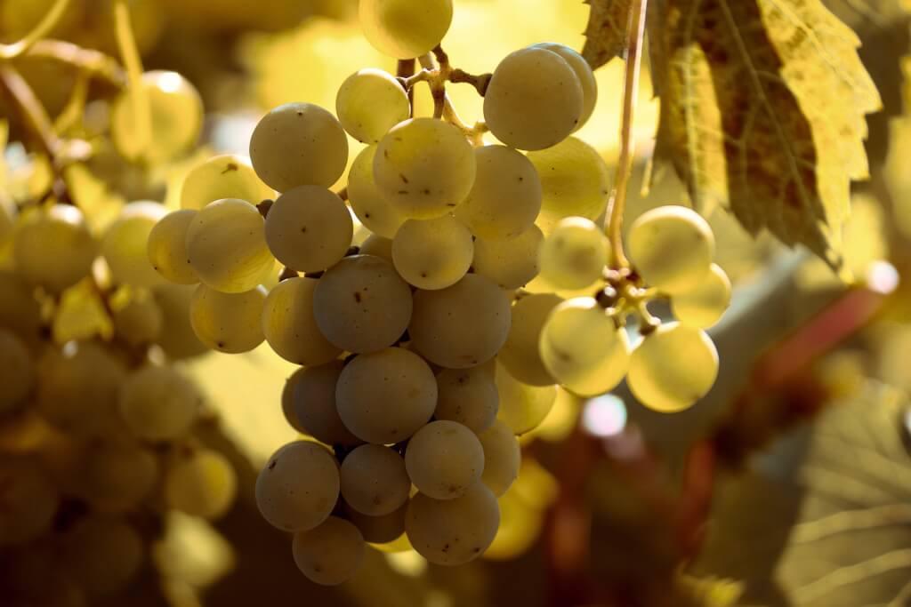 grape 4426220 1920