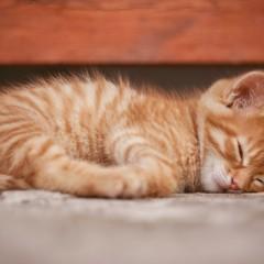 Besser schlafen - mit einer Abendroutine zu besserer Schlafhygiene