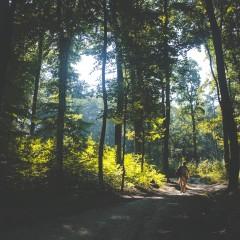 Waldbaden, eine Anleitung