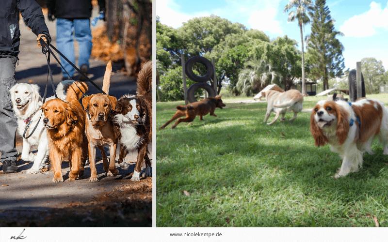Positionierung Remix Beispiel Hundekindergarten 800x500