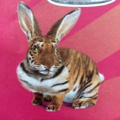 PositivesRessourcenmanagement mit einer Frage: Tiger oder Scheintiger?