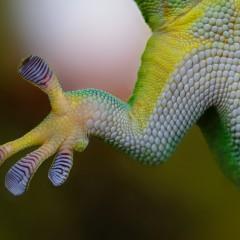 Die innere Haltung verstehen und verändern – oder die Geschichte vom Lagerkoller, Laufen und dem Lizard