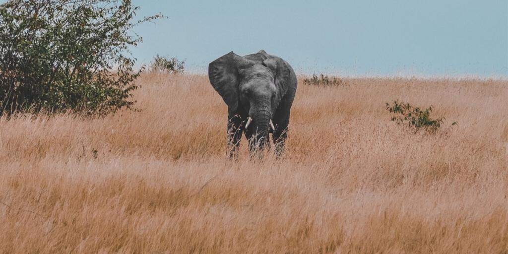 Das Finanzamt, Schneebälle und ein dicker Elefant