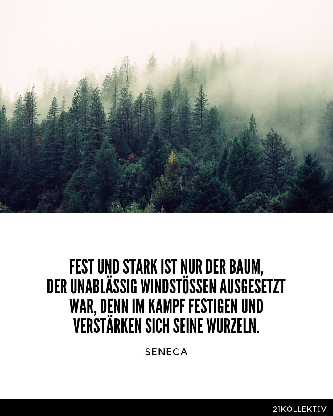 Fest und stark ist nur der Baum, der unablässig Windstössen ausgesetzt war, denn im Kampf festigen und verstärken sich seine Wurzeln. Seneca Lebensweisheiten