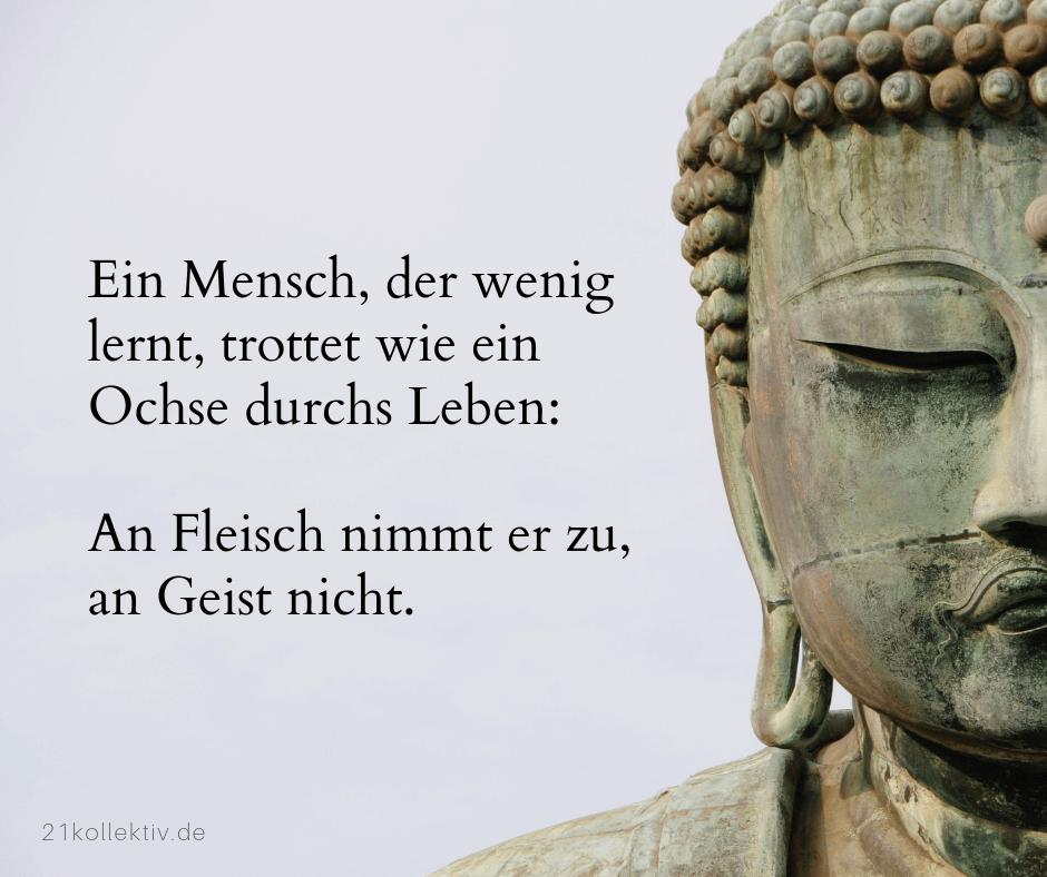 Ein Mensch, der wenig lernt, trottet wie ein Ochse durch Leben: An Fleisch nimmt er zu, an Geist nicht. | Buddhistische Lebensweisheiten