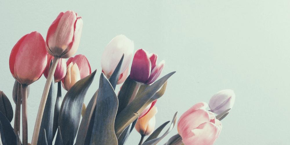 Was bedeuten Tulpen? Finde es auf unserem Blog heraus!