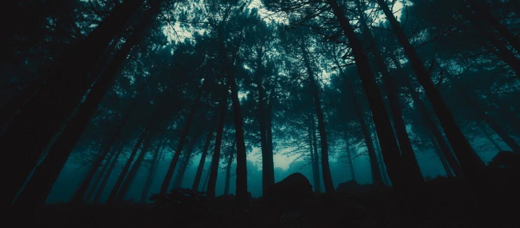 Gruselig Dunkler Wald
