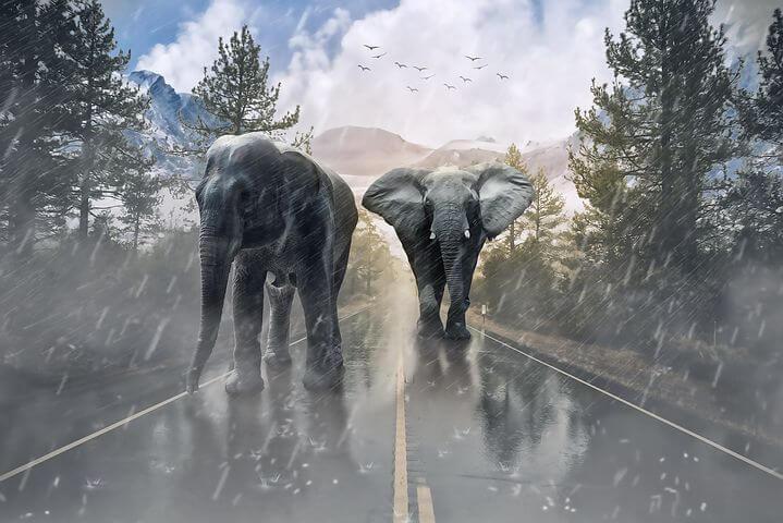 Du und dein Business, ihr sollt so stark sein wie diese Elefanten
