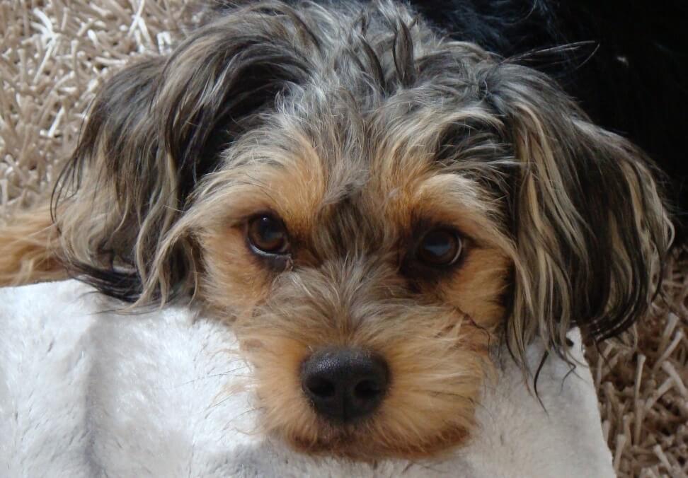Angst vor Feuerwerk? - Tipps und Tricks für Hund und Katze