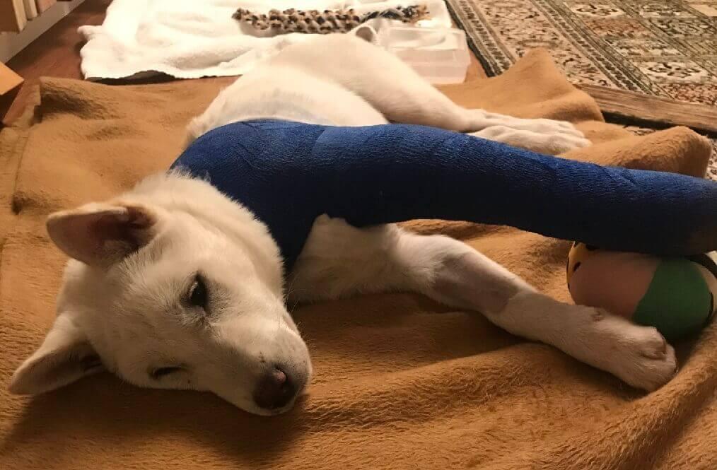 Ken Hund verletzt nach Feuerwerk