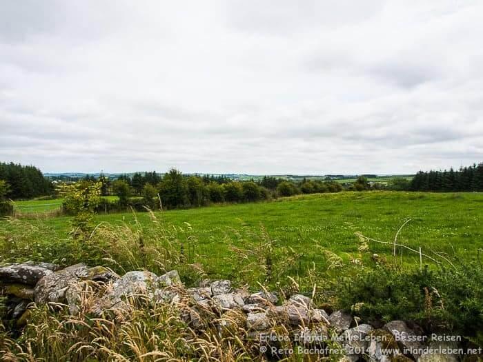 Der Fern Walk führt durch die grünen Hügel West Corks. Immer wieder vorbei an den typischen alten Trockenmauern.