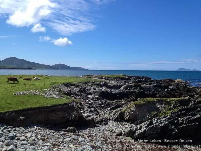 Auf der Rundwanderung bei Eyeries. Halbinsel Beara im Südwesten von Irland.