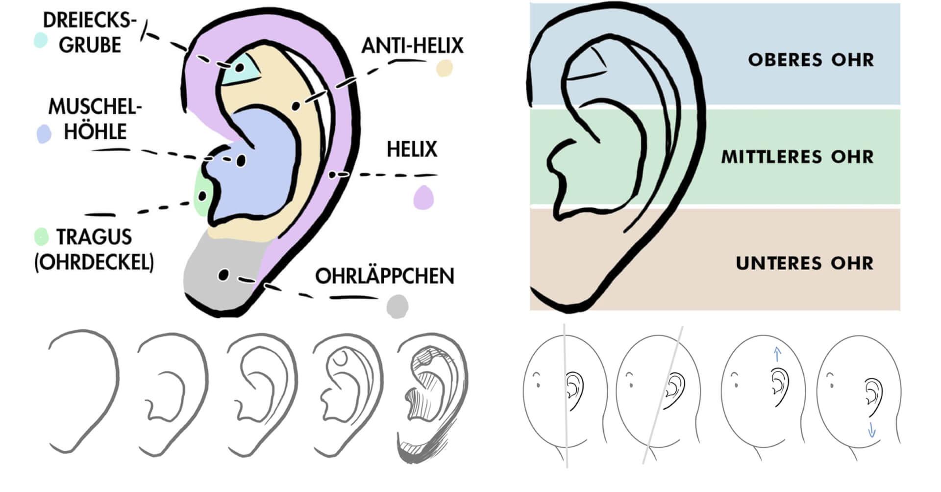 Grundlagen des Porträt-Zeichnens Teil 1: Charakterstarke Ohren zeichnen