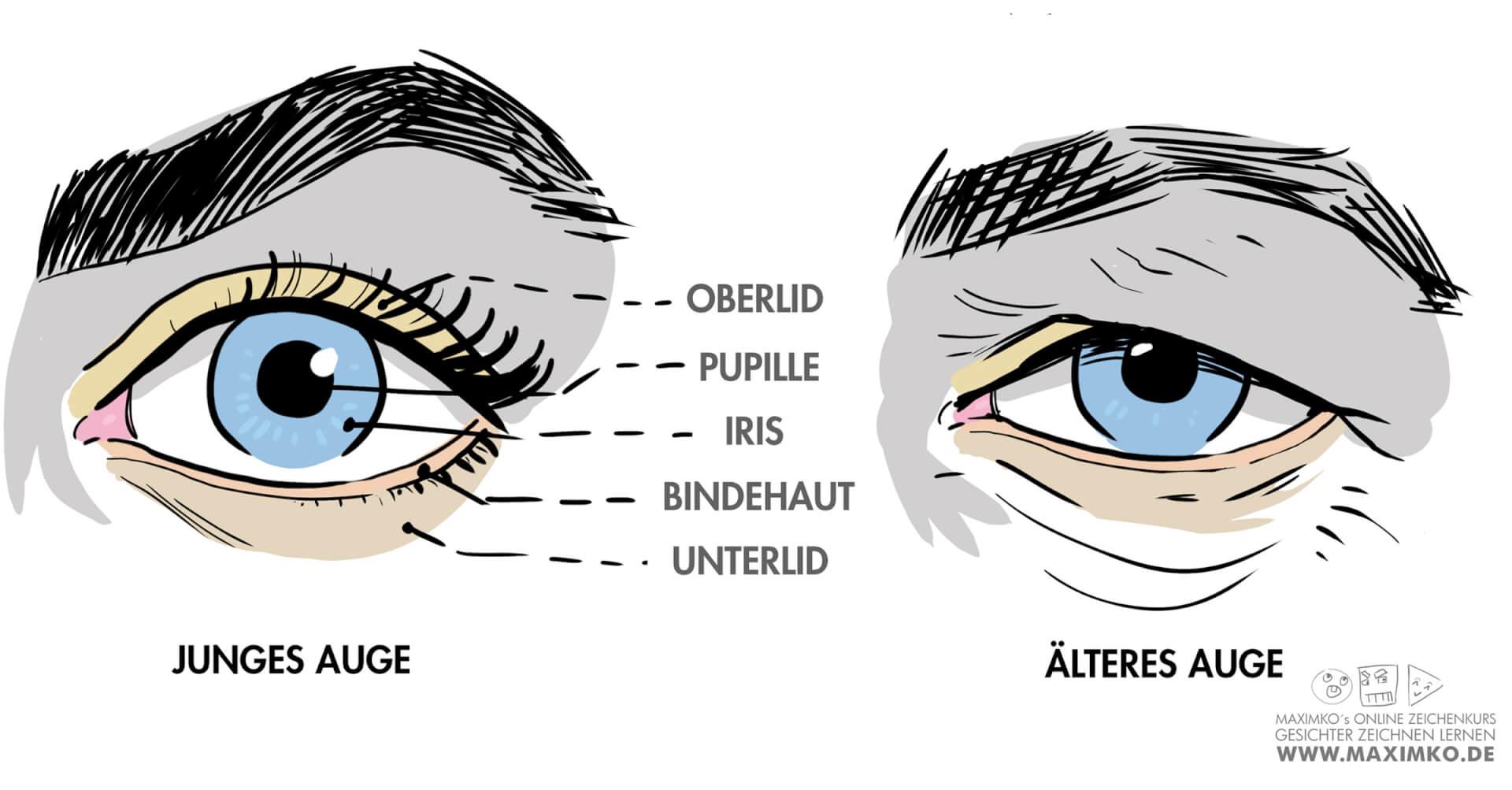 Wie zeichnet man Augen? Gesichter-Zeichnen-Grundlagen Teil 3