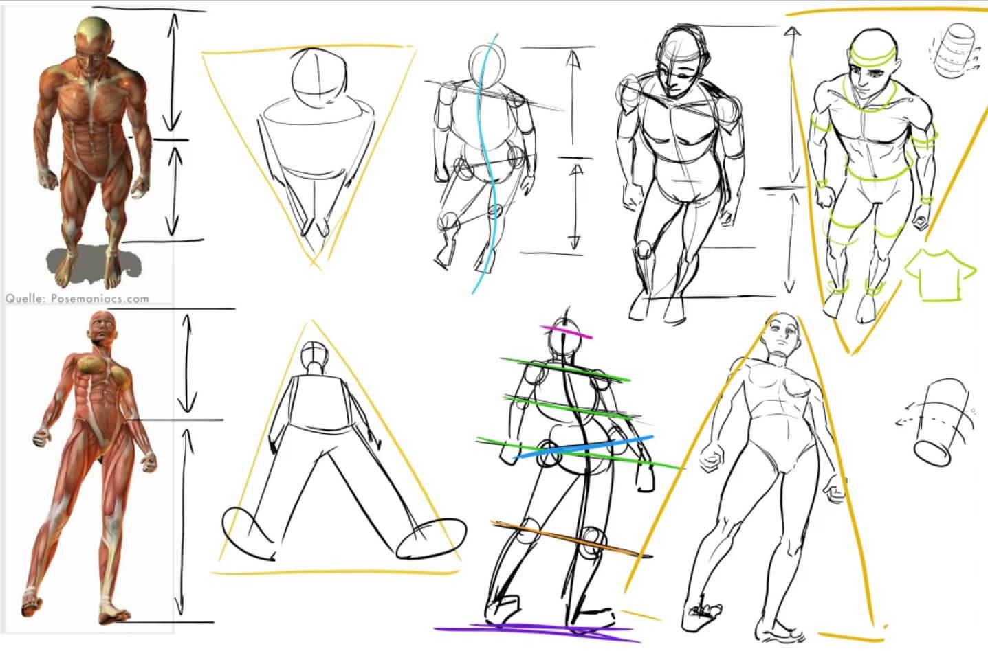 menschen zeichnen in perspektive anatomie gesicht online kurs mit maxim simonenko